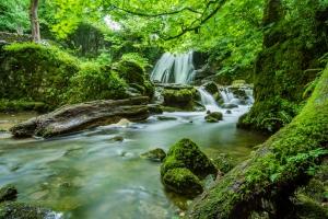 Правила за ЗБУТ в горските територии